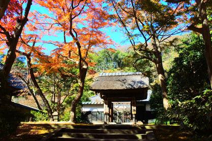 Hitotsubashi ICS Japanese culture4