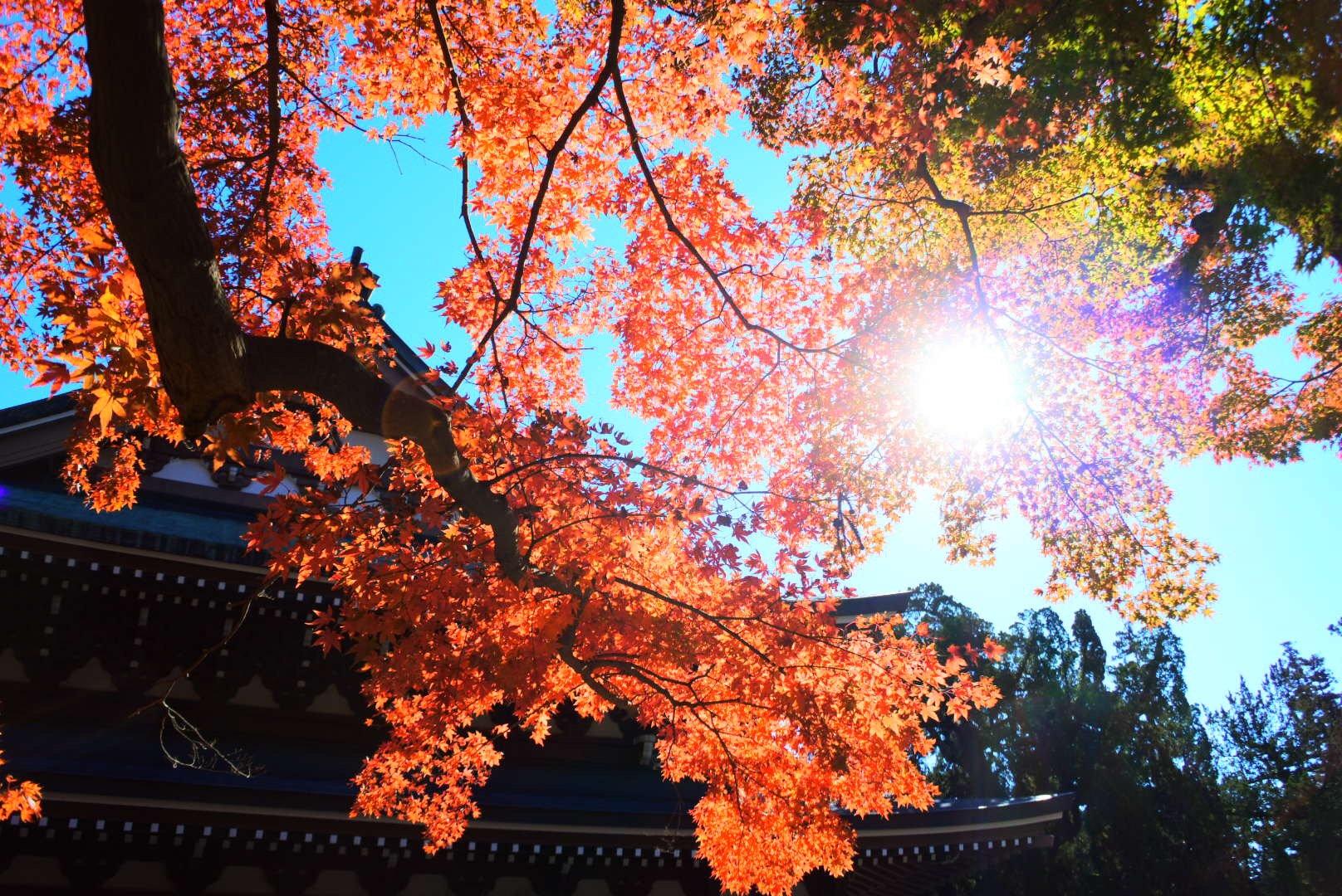 HitotsubashiICS_Foliage4