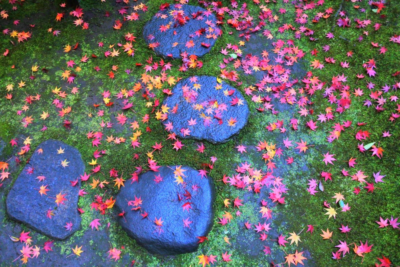 HitotsubashiICS_Foliage5