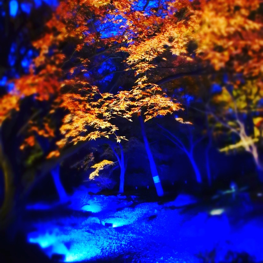 HitotsubashiICS_Foliage3